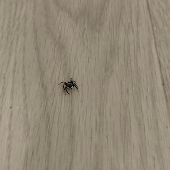 蜘蛛と遊ぶ